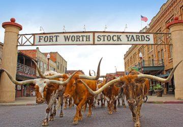 Texas: Stolz, Freiheitsliebe und gewaltige Ausmaße