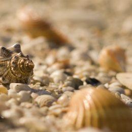 Muschel auf Sanibel Island