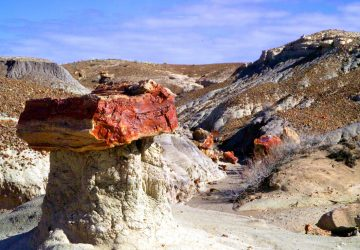 Petrified Forest National Park: Versteinerter Urwald
