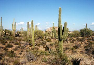 Saguaro National Park: Im Zeichen des Kaktus