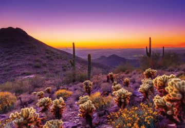 Scottsdale: Die blühende Ferienoase