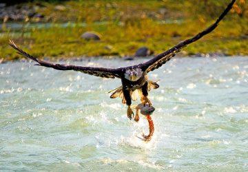 Wrangell - St. Elias National Park: Die Superlative im Norden