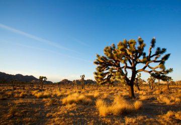 Joshua Tree National Park: Bizarre Felsen und wundersame Bäume