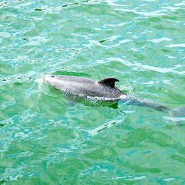 Hier leben viele Delfine